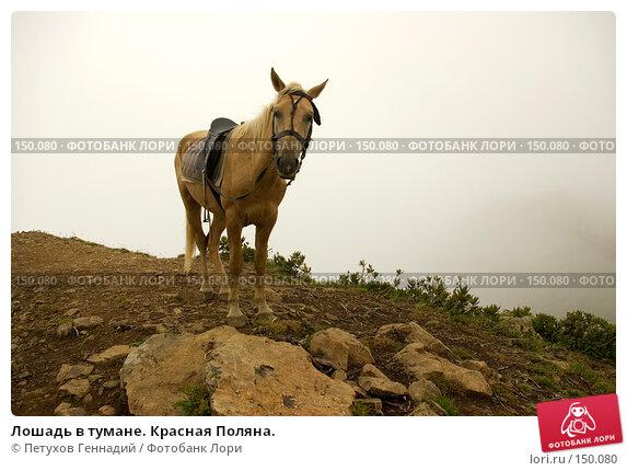 Купить «Лошадь в тумане. Красная Поляна.», фото № 150080, снято 16 августа 2007 г. (c) Петухов Геннадий / Фотобанк Лори