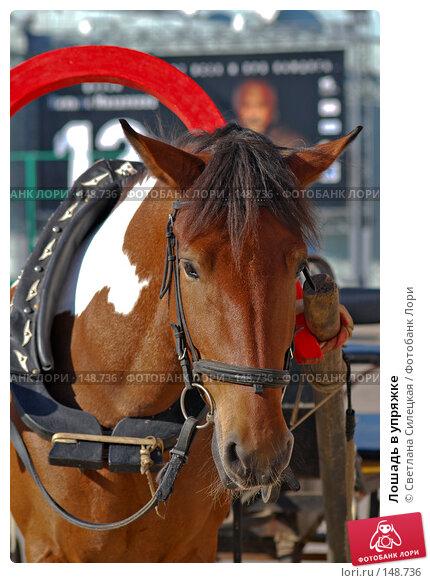 Лошадь в упряжке, фото № 148736, снято 23 сентября 2007 г. (c) Светлана Силецкая / Фотобанк Лори