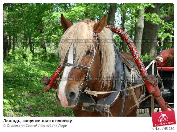 Лошадь, запряженная в повозку, фото № 45280, снято 19 мая 2007 г. (c) Старостин Сергей / Фотобанк Лори