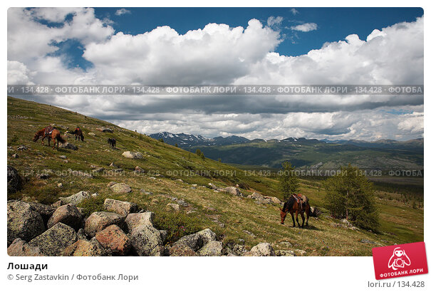 Купить «Лошади», фото № 134428, снято 30 июня 2006 г. (c) Serg Zastavkin / Фотобанк Лори