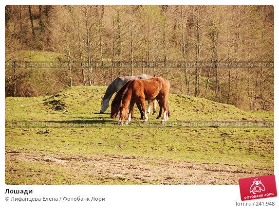 Лошади, фото № 241948, снято 26 марта 2008 г. (c) Лифанцева Елена / Фотобанк Лори