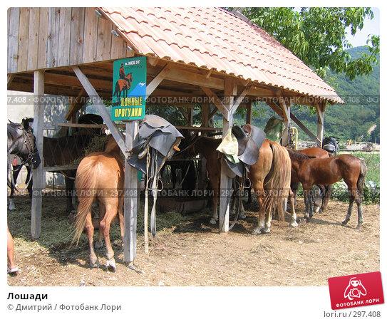 Лошади, фото № 297408, снято 16 августа 2006 г. (c) Дмитрий / Фотобанк Лори