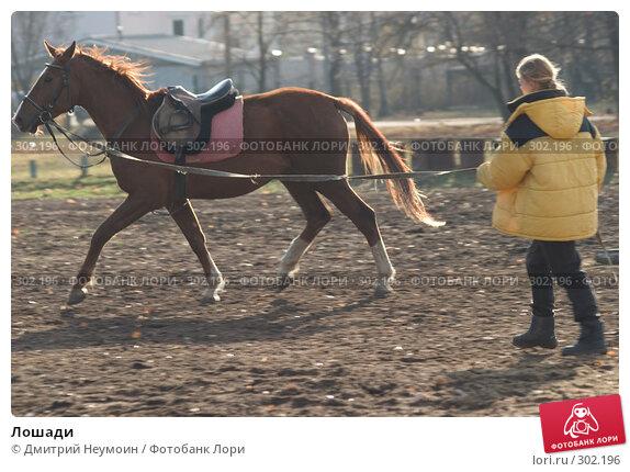 Купить «Лошади», эксклюзивное фото № 302196, снято 23 апреля 2018 г. (c) Дмитрий Неумоин / Фотобанк Лори