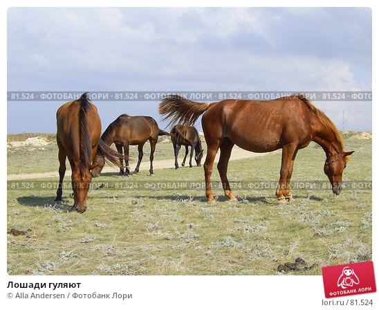 Лошади гуляют, фото № 81524, снято 7 января 2005 г. (c) Alla Andersen / Фотобанк Лори