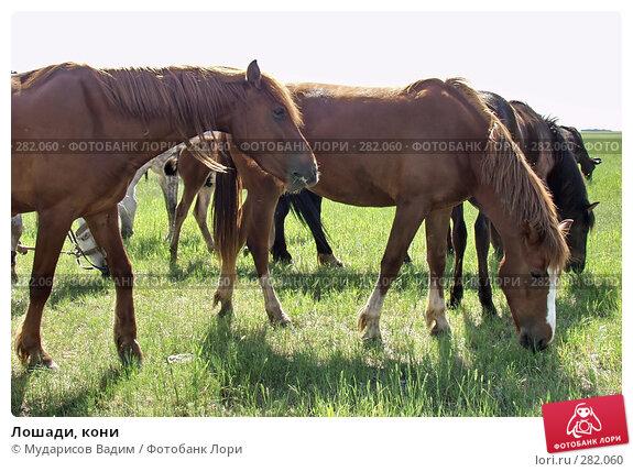 Лошади, кони, фото № 282060, снято 24 апреля 2017 г. (c) Мударисов Вадим / Фотобанк Лори