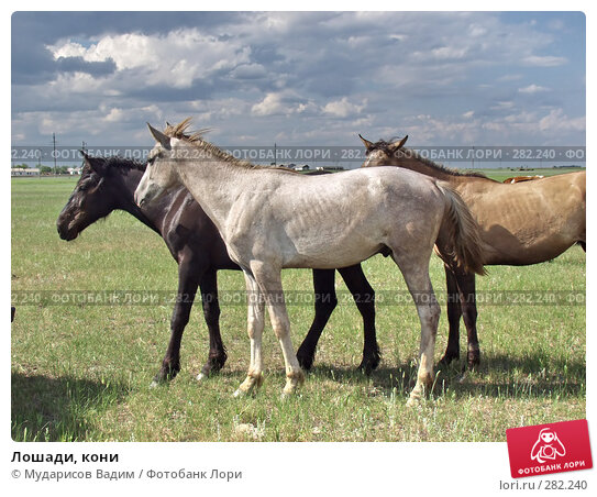 Лошади, кони, фото № 282240, снято 28 апреля 2017 г. (c) Мударисов Вадим / Фотобанк Лори