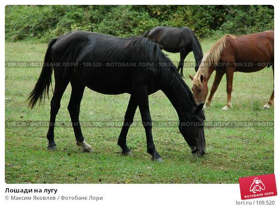 Лошади на лугу, фото № 109520, снято 10 сентября 2007 г. (c) Максим Яковлев / Фотобанк Лори