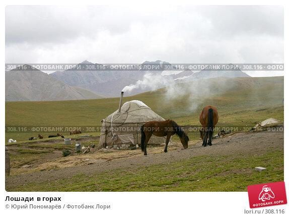 Лошади  в горах, фото № 308116, снято 29 августа 2006 г. (c) Юрий Пономарёв / Фотобанк Лори