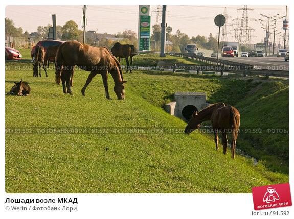 Лошади возле МКАД, фото № 91592, снято 2 октября 2007 г. (c) Werin / Фотобанк Лори