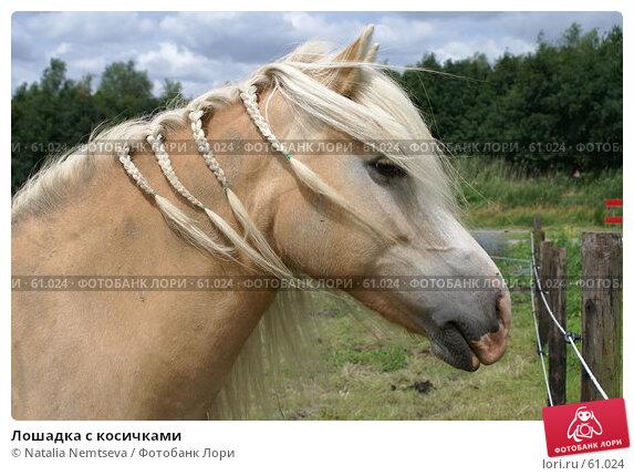 Лошадка с косичками, эксклюзивное фото № 61024, снято 27 июня 2007 г. (c) Natalia Nemtseva / Фотобанк Лори