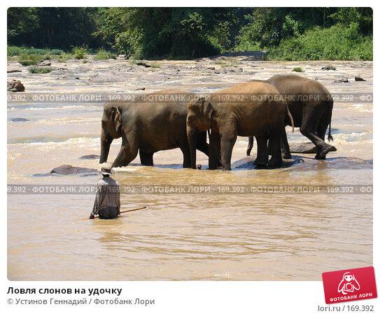 Ловля слонов на удочку, фото № 169392, снято 30 апреля 2005 г. (c) Устинов Геннадий / Фотобанк Лори