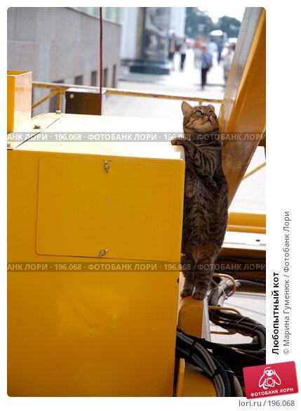Любопытный кот, фото № 196068, снято 23 июня 2007 г. (c) Марина Гуменюк / Фотобанк Лори