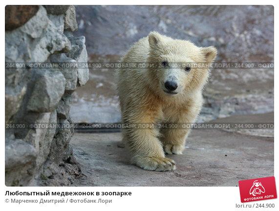 Любопытный медвежонок в зоопарке, фото № 244900, снято 22 марта 2008 г. (c) Марченко Дмитрий / Фотобанк Лори