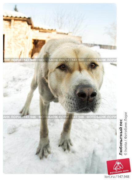 Любопытный пес, фото № 147948, снято 17 марта 2007 г. (c) hunta / Фотобанк Лори