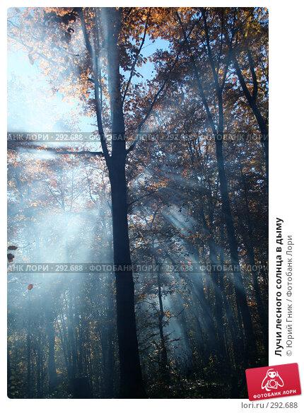 Лучи лесного солнца в дыму, фото № 292688, снято 26 октября 2007 г. (c) Юрий Гник / Фотобанк Лори