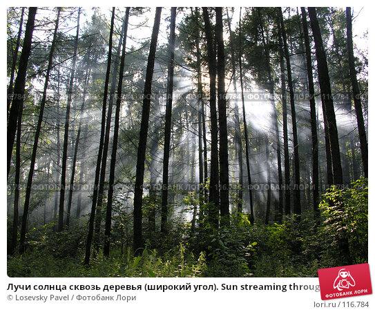 Лучи солнца сквозь деревья (широкий угол). Sun streaming through trees in the woods, фото № 116784, снято 3 июля 2005 г. (c) Losevsky Pavel / Фотобанк Лори