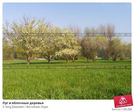 Купить «Луг и яблочные деревья», фото № 130256, снято 18 мая 2004 г. (c) Serg Zastavkin / Фотобанк Лори