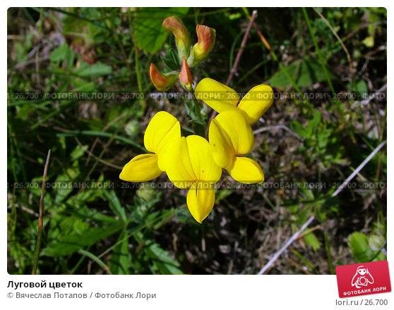 Луговой цветок, фото № 26700, снято 26 июня 2004 г. (c) Вячеслав Потапов / Фотобанк Лори