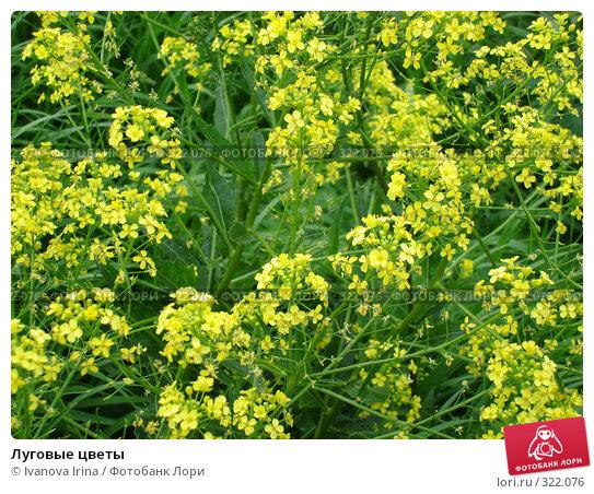 Луговые цветы, фото № 322076, снято 12 июня 2008 г. (c) Ivanova Irina / Фотобанк Лори