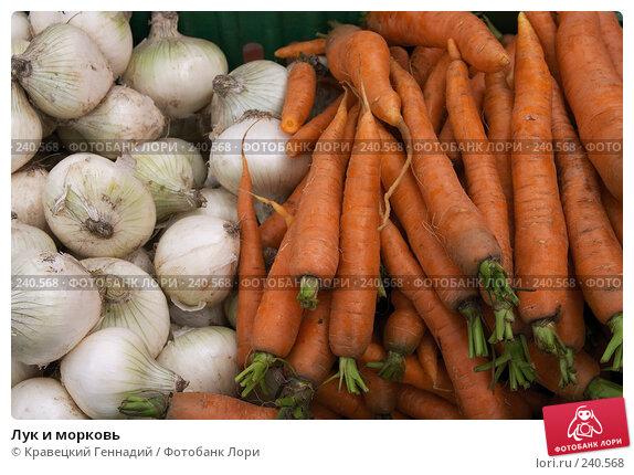 Лук и морковь, фото № 240568, снято 19 января 2017 г. (c) Кравецкий Геннадий / Фотобанк Лори