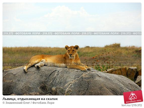 Львица, отдыхающая на скалах, фото № 219372, снято 24 января 2008 г. (c) Знаменский Олег / Фотобанк Лори