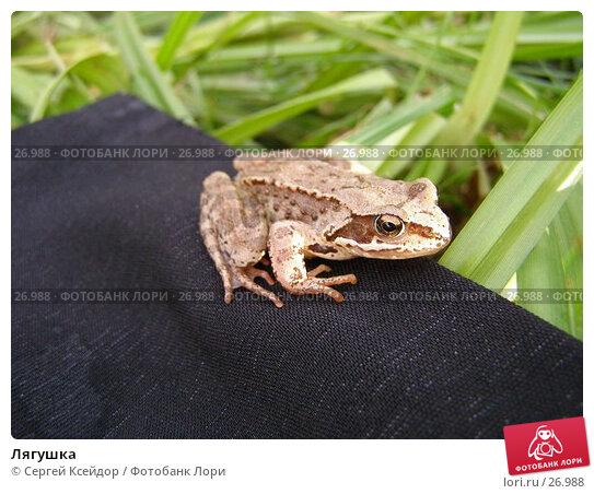 Лягушка, фото № 26988, снято 27 июня 2006 г. (c) Сергей Ксейдор / Фотобанк Лори