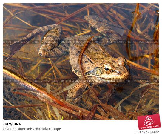 Лягушка, фото № 228668, снято 7 апреля 2005 г. (c) Илья Троицкий / Фотобанк Лори