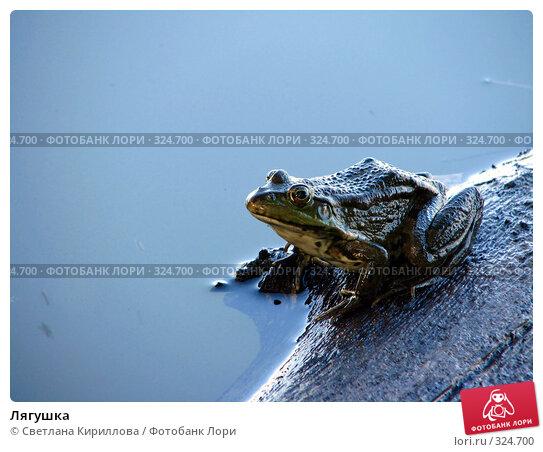 Лягушка, фото № 324700, снято 12 июня 2008 г. (c) Светлана Кириллова / Фотобанк Лори