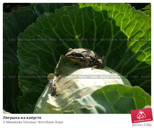Лягушка на капусте, фото № 7052, снято 9 июля 2006 г. (c) Минакова Татьяна / Фотобанк Лори