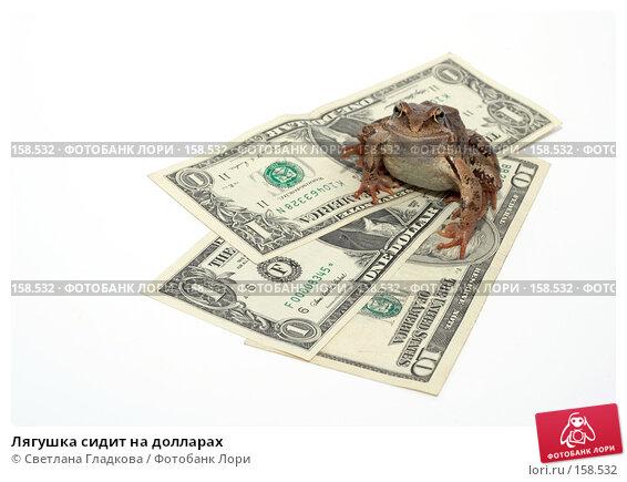 Лягушка сидит на долларах, фото № 158532, снято 7 июля 2007 г. (c) Cветлана Гладкова / Фотобанк Лори