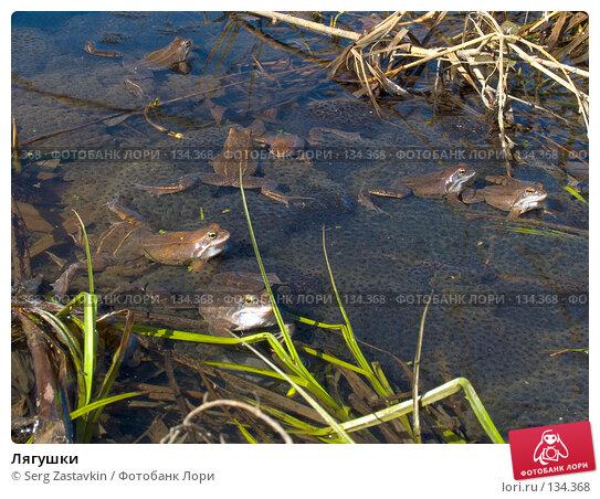 Лягушки, фото № 134368, снято 14 мая 2004 г. (c) Serg Zastavkin / Фотобанк Лори