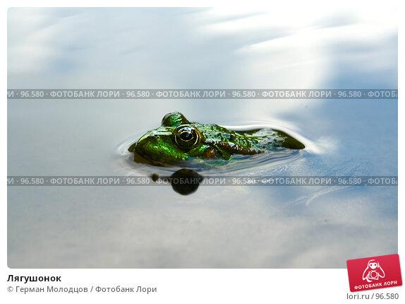 Лягушонок, фото № 96580, снято 16 августа 2007 г. (c) Герман Молодцов / Фотобанк Лори