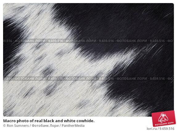 Amazoncom Brindle White Belly Cowhide rug Cow Hide Skin