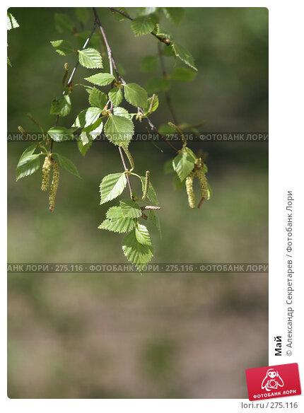 Май, фото № 275116, снято 13 мая 2007 г. (c) Александр Секретарев / Фотобанк Лори