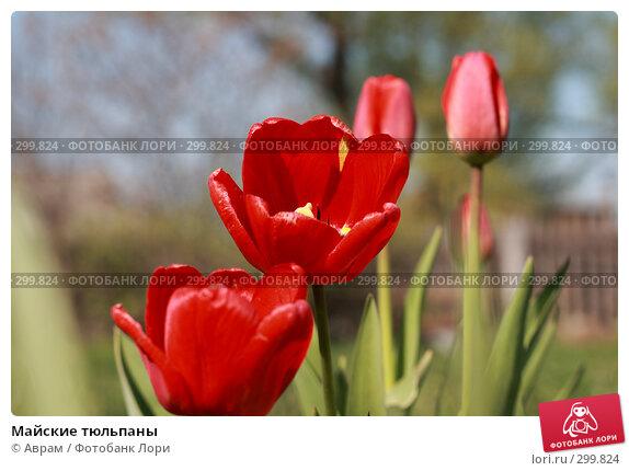 Майские тюльпаны, фото № 299824, снято 9 мая 2008 г. (c) Аврам / Фотобанк Лори