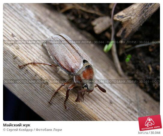 Майский жук, фото № 30044, снято 17 апреля 2006 г. (c) Сергей Ксейдор / Фотобанк Лори