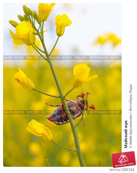 Майский жук, фото № 329532, снято 31 мая 2008 г. (c) Майя Крученкова / Фотобанк Лори