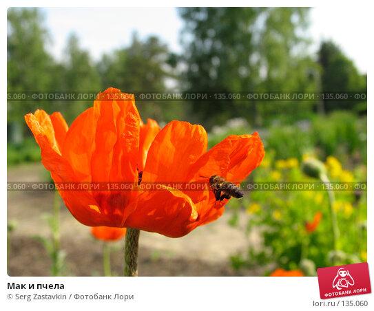 Купить «Мак и пчела», фото № 135060, снято 11 июня 2004 г. (c) Serg Zastavkin / Фотобанк Лори
