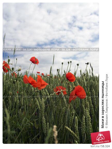 Маки в зарослях пшеницы, фото № 58324, снято 20 июня 2006 г. (c) Михаил Лавренов / Фотобанк Лори
