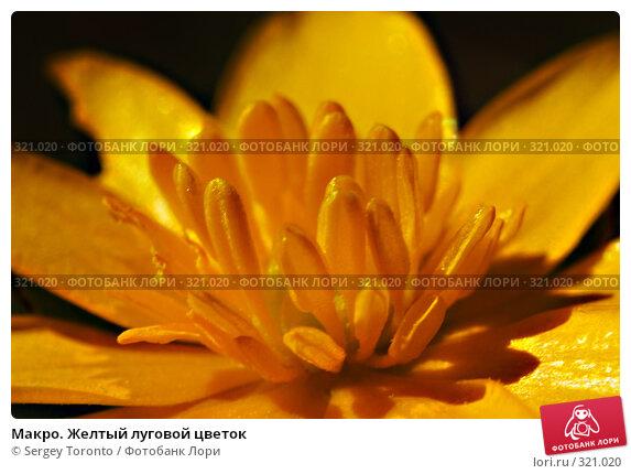 Макро. Желтый луговой цветок, фото № 321020, снято 26 апреля 2008 г. (c) Sergey Toronto / Фотобанк Лори