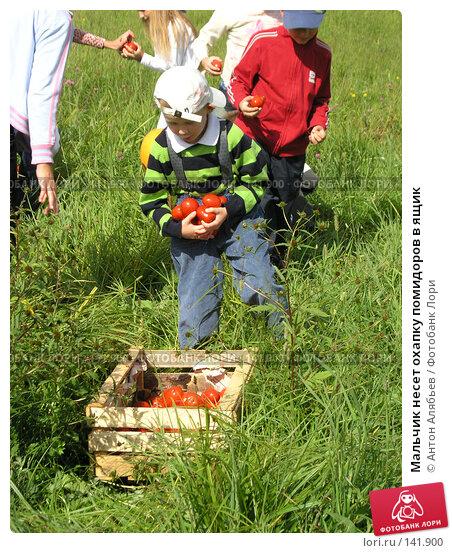 Мальчик несет охапку помидоров в ящик, фото № 141900, снято 4 сентября 2005 г. (c) Антон Алябьев / Фотобанк Лори