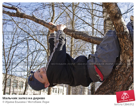 Мальчик залез на дерево, фото № 264012, снято 23 апреля 2008 г. (c) Ирина Еськина / Фотобанк Лори