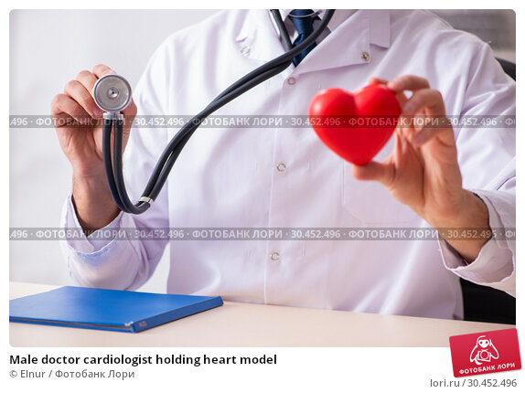Male doctor cardiologist holding heart model. Стоковое фото, фотограф Elnur / Фотобанк Лори