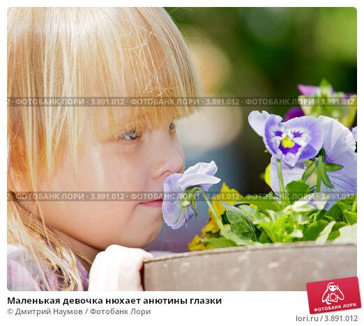 Купить «Маленькая девочка нюхает анютины глазки», фото № 3891012, снято 20 мая 2012 г. (c) Дмитрий Наумов / Фотобанк Лори
