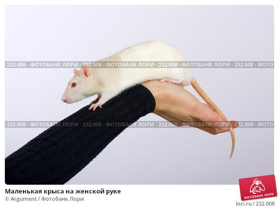 Маленькая крыса на женской руке, фото № 232008, снято 20 марта 2008 г. (c) Argument / Фотобанк Лори