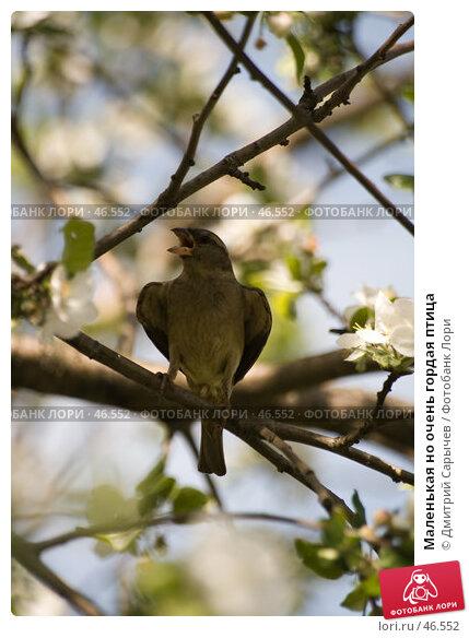 Маленькая но очень гордая птица, фото № 46552, снято 20 мая 2007 г. (c) Дмитрий Сарычев / Фотобанк Лори