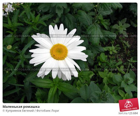 Маленькая ромашка, фото № 23684, снято 22 июля 2006 г. (c) Куприянов Евгений / Фотобанк Лори