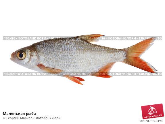 Маленькая рыба, фото № 130496, снято 14 августа 2007 г. (c) Георгий Марков / Фотобанк Лори