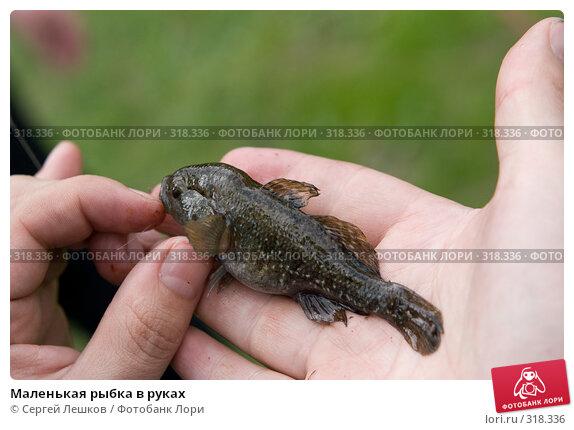 Маленькая рыбка в руках, фото № 318336, снято 18 мая 2008 г. (c) Сергей Лешков / Фотобанк Лори