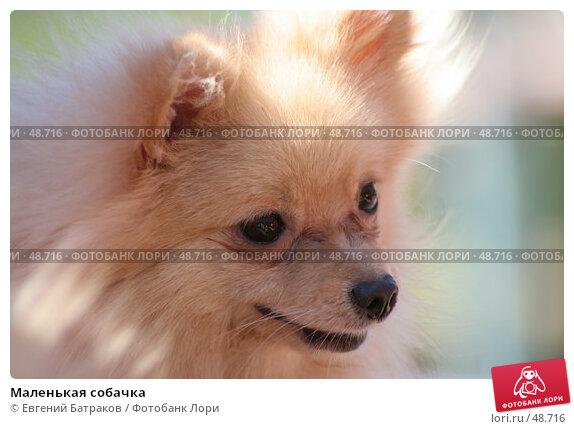 Маленькая собачка, фото № 48716, снято 19 мая 2007 г. (c) Евгений Батраков / Фотобанк Лори